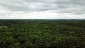Ansicht vom Brummen, das über das forestUSA fliegt stock footage