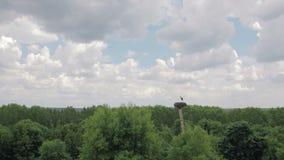 Ansicht vom Fenster des Hauses auf dem weißen Storch, der im Nest steht stock video footage