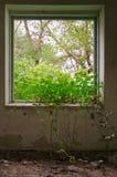 Ansicht vom Fenster eines ruinierten Hauses Stockfoto