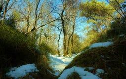 Ansicht vom Moloda Berg, Ukraine stockbilder