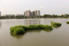 Ansicht vom Park in Singapur mit den traditionellen Wohnungen im Hintergrund Stockbilder