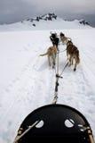 Ansicht vom Schlitten gezogen durch Hunde auf Schnee Lizenzfreies Stockbild