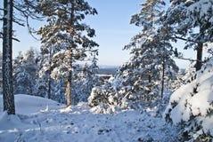 Ansicht vom Waldbrandkontrollturm. (6) Lizenzfreies Stockfoto