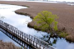 Ansicht von über einem Sumpf Stockfoto
