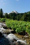 Ansicht von Altai Lizenzfreies Stockbild