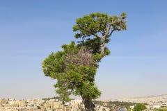 Ansicht von Ammans Skylinen, Jordanien Lizenzfreie Stockfotografie