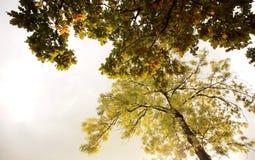 Ansicht von Bäumen im Fall Lizenzfreie Stockbilder