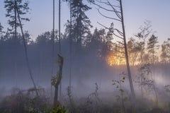 Ansicht von Bäumen und von Baumstümpfen im nebeligen Sumpf bei Sonnenuntergang Stockfotos