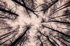 Ansicht von Bäumen von der Unterseite. Schwarze Schattenbilder auf einem Weiß lizenzfreie stockfotografie