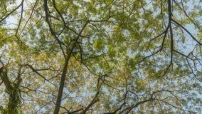 Ansicht von Blättern und von Niederlassungen eines Baums lizenzfreies stockbild
