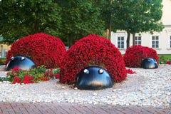 Ansicht von Blumen-Marienkäfern Stockbild