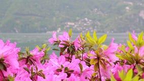 Ansicht von Blumen mit einem Hintergrund auf einem See und Bergen stock footage