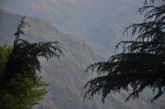 Ansicht von Cedrusbäumen Stockbilder