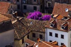 Ansicht von Dächern des roten Backsteins und von schönen blühenden Büschen stockfoto