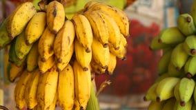 Ansicht von den Bananen, die im lokalen Shop in Mirissa, Sri Lanka hängen stock video