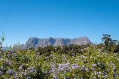Ansicht von den Blumen, von Grün und von Bergen genommen vom Tokara-Wein-Zustand, Stellenbosch, Südafrika, an einem vollen Tag lizenzfreie stockbilder