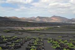 Ansicht von den Bodegas von La Geria Stockfoto