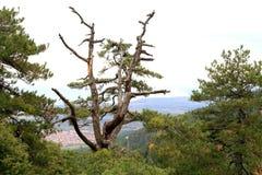 Ansicht von den olympischen Bergen. stockbilder