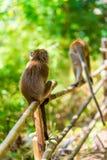 Ansicht von den zurück- Affen auf dem Zaun Stockbilder