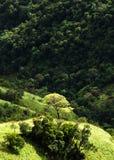 Ansicht von der kleinen des Adams Spitze, Sri Lanka Stockfoto