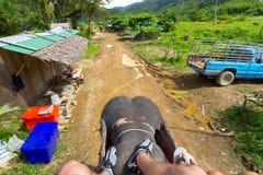 Ansicht von der Oberseite des Elefanten Stockfotografie