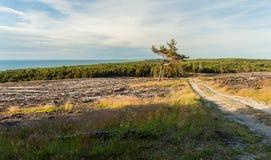 Ansicht von der Spitze der sandigen Düne Stockfotos