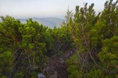 Ansicht von der Spitze des Berges auf der Bank Lizenzfreie Stockfotos