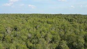 Ansicht von der Spitze des Waldes stock video