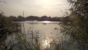 Ansicht von einem schönen See im Vacaresti-Natur-Park, Bukarest-Stadt, Rumänien stock video footage
