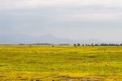 Ansicht von einem Teich und von Hügel in der Savanne Stockbild