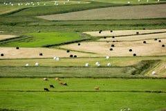 Ansicht von Feldern und von Vieh von oben Lizenzfreie Stockfotografie