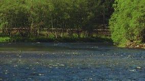 Ansicht von flüssigem Fluss in den verschiedenen Richtungen Sonniger Tag des Sommers niemand Grüner Wald niemand stock footage
