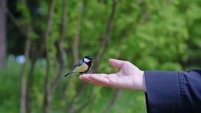 Ansicht von Frau ` s Hand, die Korn hält und Vögel einzieht lizenzfreie stockfotos