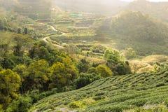 Ansicht von grünen Feldern Lizenzfreies Stockfoto