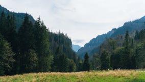 Ansicht von Koscielisko-Tal in polnischem Tatras Stockfotos