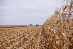 Ansicht von Linien der Maisstoppel während des Erntens Lizenzfreie Stockbilder