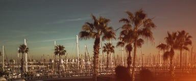Ansicht von mehrfachen Yachten und von Palmen, Barcelona lizenzfreies stockbild