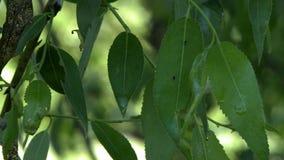 Ansicht von nassen Blättern nach Regen, Nahaufnahme stock video footage