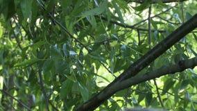 Ansicht von nassen Blättern nach Regen, Nahaufnahme stock footage