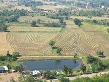 Ansicht von oben genanntem des gepflogenen Reisfeldes, -häuser und -plantagen in einem ländlichen Gebiet von Thailand Stockfotos