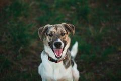 Ansicht von oben am glücklichen nicht reinrassigen Hund mit Stellung und am Betrachten der Kamera stockbilder