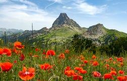Ansicht von ` Ossau Pic du Midi s d auf Französisch Pyrenäen, mit Feld von p lizenzfreies stockfoto