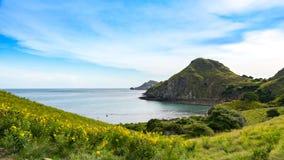 Ansicht von Padar-Insel mit Gelb blüht Vordergrund stockfoto