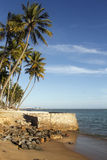 Ansicht von Ponta Verde Stockbilder