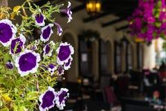 Ansicht von purpurroten Blumen in den Töpfen vor Café Stockfotografie