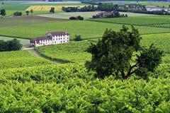 Ansicht von Reben auf einem Hügel Stockfoto