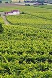 Ansicht von Reben auf einem Hügel Stockfotos