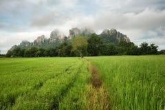 Ansicht von Reis Feld und Khao noch mit teilweisem bewölktem bei Nakhon Sawan, Thailand lizenzfreie stockfotografie