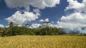 Ansicht von Reisfeldern in Bali Stockbilder