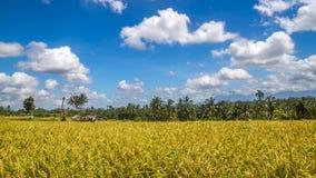 Ansicht von Reisfeldern in Bali Lizenzfreie Stockbilder